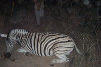 Highlight for Album: Nanambia, Africa 2006